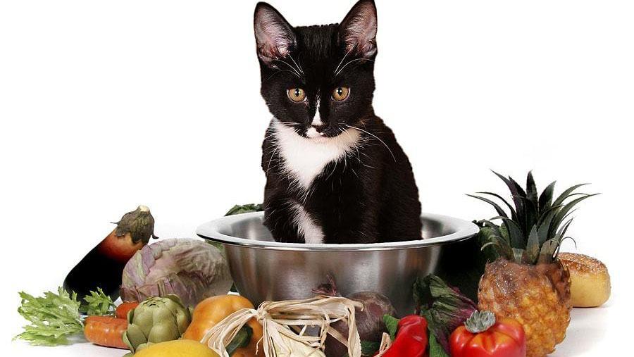 Nên Làm Gì Nếu Con Mèo Ăn Dưa Chua?