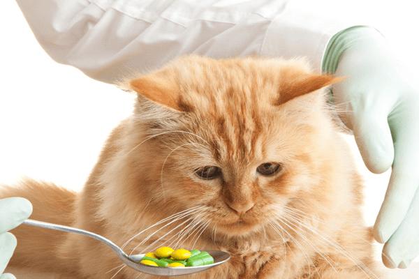 Những Loại Đồ Ăn Nguy Hiểm Cho Mèo Cần Lưu Ý