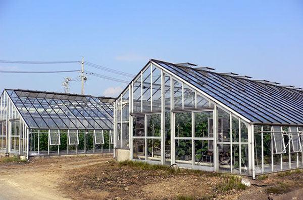 Công việc thực tế của đơn hàng nông nghiệp nhà kính